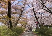 日本櫻花見:5D0F357E-AD62-4F31-9DB2-D0A905E72140_調整大小.jpg