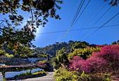 白毛台山  櫻花:IMG_20210213_094207_調整大小.jpg