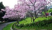 陽明山 櫻花+1:DSC_0254_調整大小.JPG