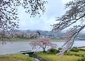 日本櫻花見:24D7D925-6A4D-4F98-AB26-2F8CE376A33E_調整大小.jpg
