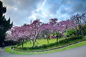 陽明山 櫻花+1:DSC_0258_調整大小.JPG