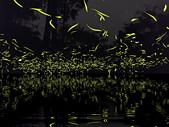華梵大學 螢火蟲之夜:Firefly_210427_7_調整大小.jpg