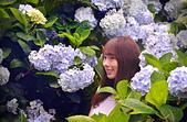 繡球花ˊ習拍:DSC_0459_調整大小.JPG