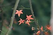 動植物-萬瑞森林12-25:IMG_0087.JPG