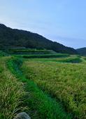 石門區 嵩山石砌梯田:日式綁稻