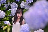 繡球花ˊ習拍:DSC_0578_調整大小.JPG
