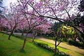 陽明山 櫻花+1:DSC_0314_調整大小.JPG