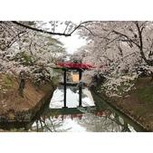 弘前公園 櫻花祭 花見:相簿封面