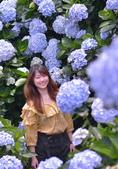 繡球花ˊ習拍:DSC_0615_調整大小.JPG