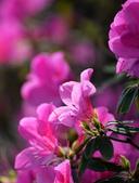 台大杜鵑花節2021:DSC_9514_調整大小.JPG