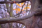 英國 白金漢宮 公園:DSC_0431_調整大小.JPG