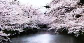 日本櫻花見:8D481D71-A31A-428D-9503-D21575310354_調整大小.jpg