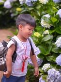 午後陽光 繡球花田:DSC_0891_調整大小.JPG