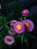 新生公園 玫瑰花:IMG_20210331_180322_調整大小.jpg