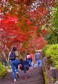 太平山莊 紅槭 的邂逅: