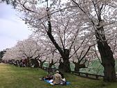 日本櫻花見:8E9F18CF-447B-401E-A106-F6161627F35C_調整大小.jpg