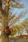 學甲欖仁樹:DSC_2340_調整大小.JPG