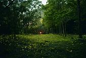華梵大學 螢火蟲之夜:1_調整大小.jpg