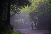 紫籐霧雨:DSC_6053_調整大小.JPG