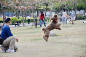 大型貴賓犬:DSC_8755_調整大小.JPG