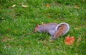 英國 白金漢宮 公園:DSC_0541_調整大小.JPG