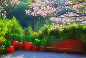 陽明山 橘餐廳 櫻花賞 4.10:DSC_0030_調整大小.JPG