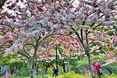 春色滿園 花旗木:DSC_0260_調整大小.JPG