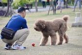 大型貴賓犬:DSC_8748_調整大小.JPG