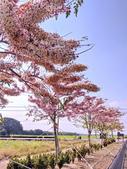2020 與春天有約 三月 花旗木:IMG_20200327_084934_調整大小.jpg