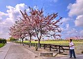 三月櫻~熱力綻放 花旗木:IMG_20200327_092320_調整大小.jpg
