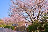 陽明山 橘餐廳 櫻花賞 4.10:DSC_0048_調整大小.JPG