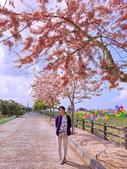 三月櫻~熱力綻放 花旗木:IMG_20200327_093226_調整大小.jpg