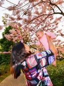 春色滿園 花旗木:DSC_0475_調整大小.JPG