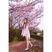 清明紫藤:相簿封面