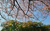 陽明山 橘餐廳 櫻花賞 4.10:DSC_0100_調整大小.JPG