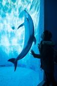 索尼世界攝影大獎  2018:李威德    dolphin_调整大小.jpg