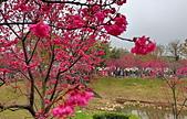 中科崴立櫻花公園 櫻花賞:IMG_20210212_160615_調整大小.jpg