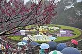 陽明山花季雨中:_DSC0168.JPG