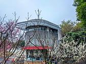 中科崴立櫻花公園 櫻花賞:IMG_20210212_161428_調整大小.jpg