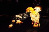 鯉魚燈:DSC_0526_調整大小.JPG