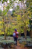 銀杏森林:DSC_0021_調整大小.JPG