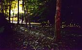 華梵大學 螢火蟲之夜:DSC_0162_調整大小.JPG