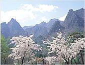 風景:韓國江原道雪嶽山國立公園外雪嶽18 - 複製.jpg