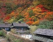 風景:日本秋田秋賞~乳頭溫泉鄉秘湯魅力2.jpg