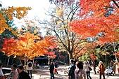 風景:日本廣島紅葉繽紛~看世界上最大的杓子!2.jpg