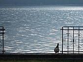風景:全世界最幸福的湖畔小鎮 人間仙境 哈修塔特7  清晨的雁鴨