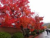 京都賞楓五日遊:嵐山、天龍寺、二尊院:PB259571.JPG