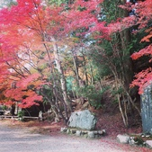 京都賞楓五日遊之二:高雄神護寺、高山寺:IMG_5296.JPG