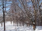 處處有驚喜追櫻踏雪之行(四)--十和田湖、奧入瀨溪:P4207088.JPG