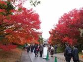京都賞楓五日遊:錦市場、宇治:PB269886.JPG